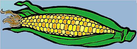 Corn-update